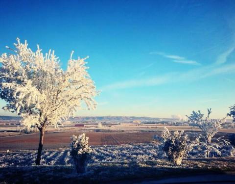 Invierno en la bodega